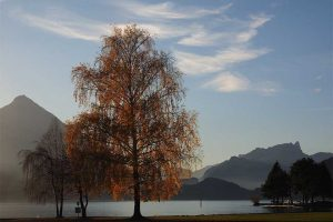WordPress-Kurse in Interlaken